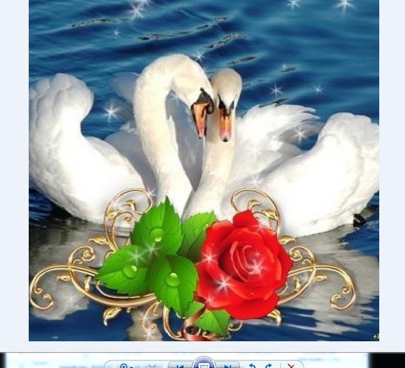 С днем свадьбы открытки с лебедями, февраля вдв